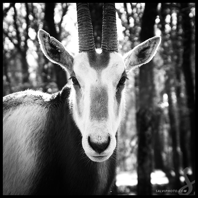 Black n'white zoo